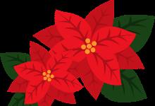 Illustrated Poinsettia